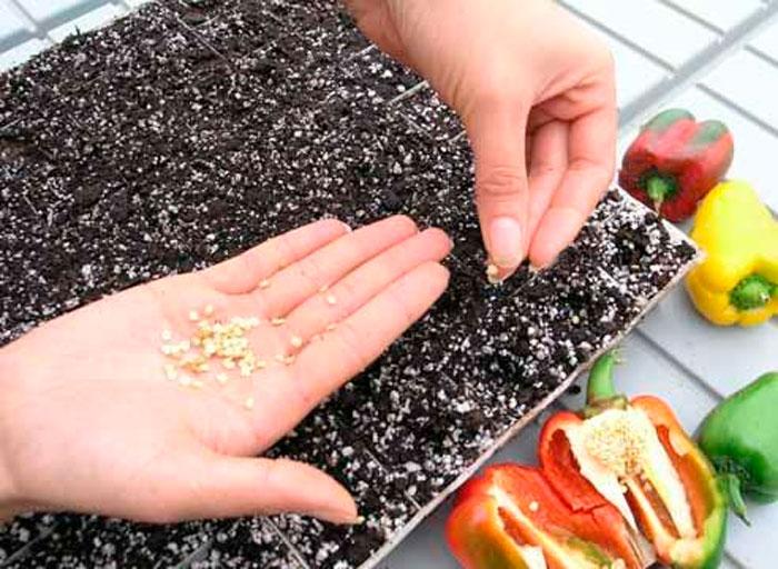 Лучшие способы выращивания крепкой рассады перца в домашних условиях 2019