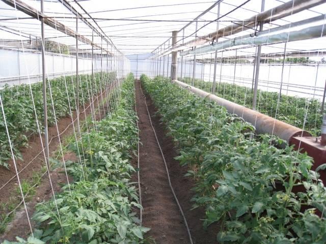 Лучшие способы выращивания крепкой рассады