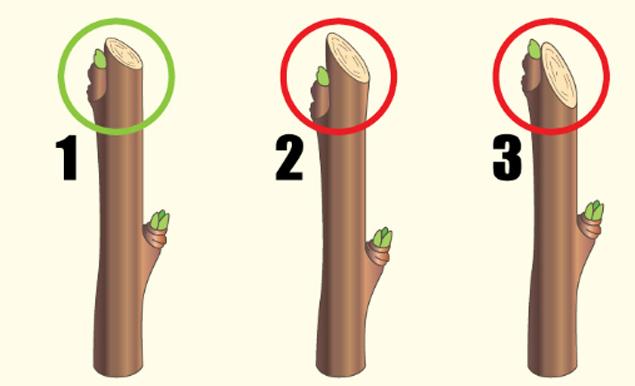 Как обрезать яблоню весной: пошаговая инструкция
