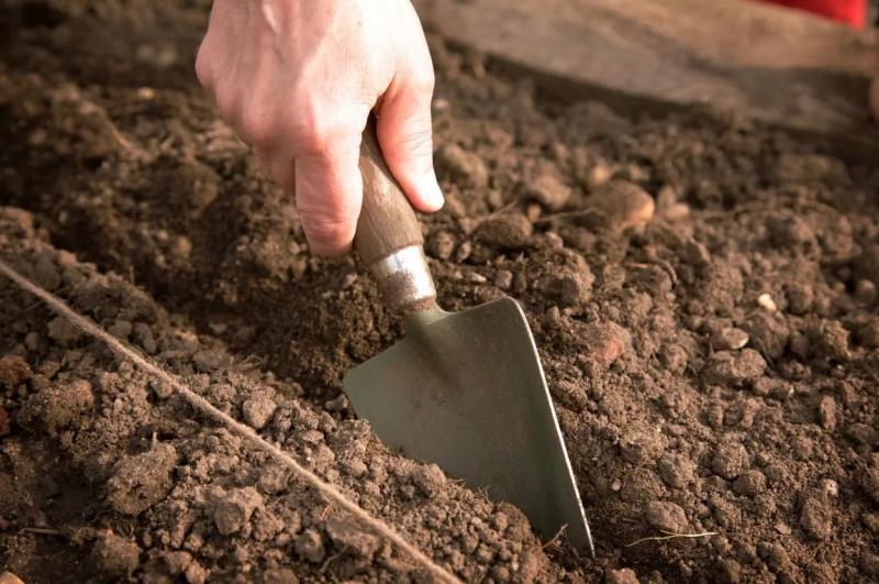 Обработка лука перед посадкой – способы, методы