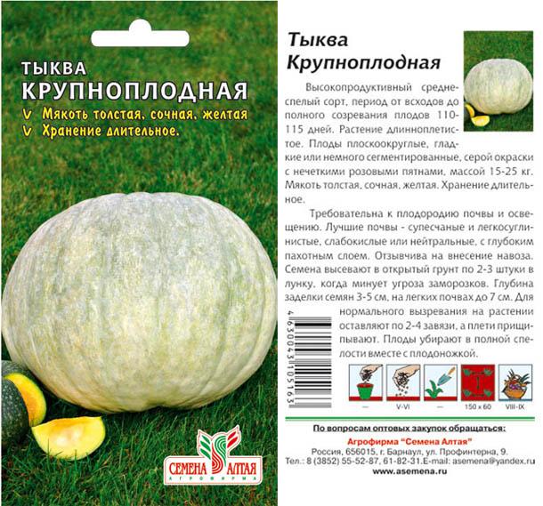 Посадка тыквы в открытый грунт - от семени к большой тыквине