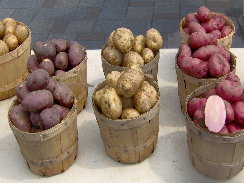 Сорта картофеля для жарки. Обзор и советы по выбору