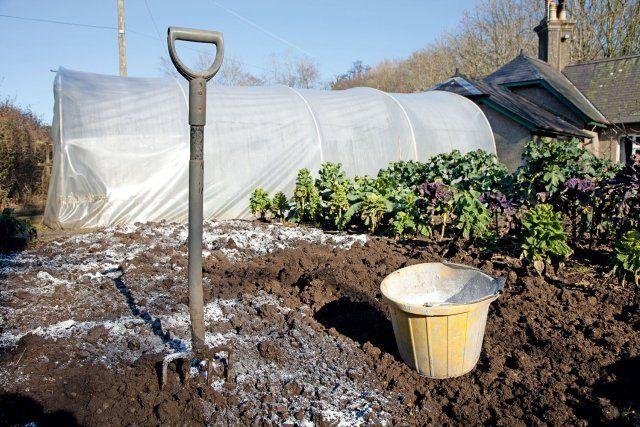 Применение доломитовой муки для удобрения грунта