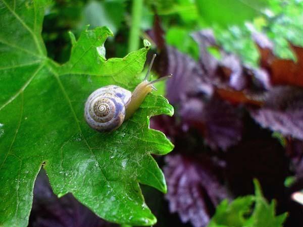 Самые опасные болезни и вредители винограда: как избавиться от них