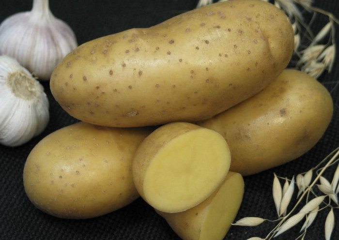 Сорта картофеля: описания, названия, фото