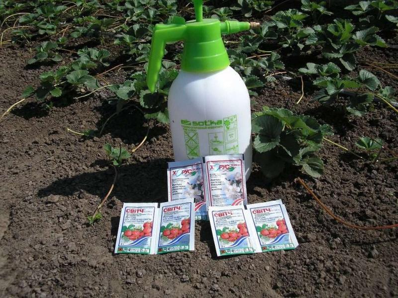 Весенняя обработка клубники от вредителей и болезней