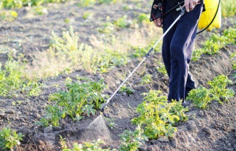 Эффективные методы и препараты для борьбы с колорадским жуком на картофеле, старые и новые