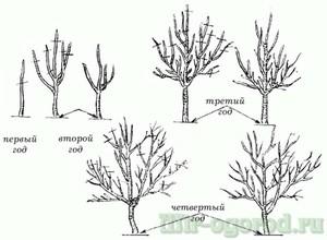Как правильно обрезать плодовые деревья: обрезка деревьев осенью или весной, советы