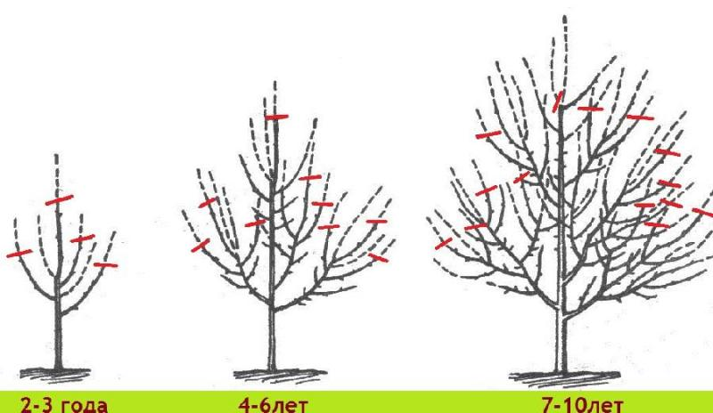 Когда обрезать деревья по осени
