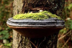 Почему на деревьях растут грибы