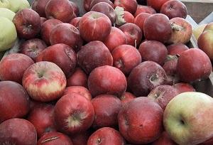 Какие яблоки сладкие сорта