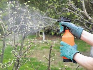 Как ухаживать за саженцами весной