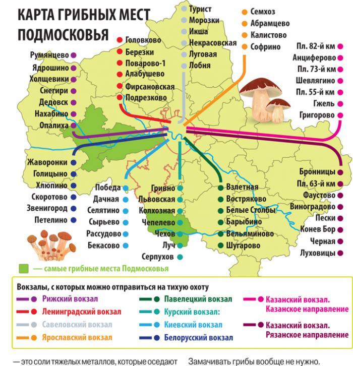 Грибная карта Подмосковья в 2020 года
