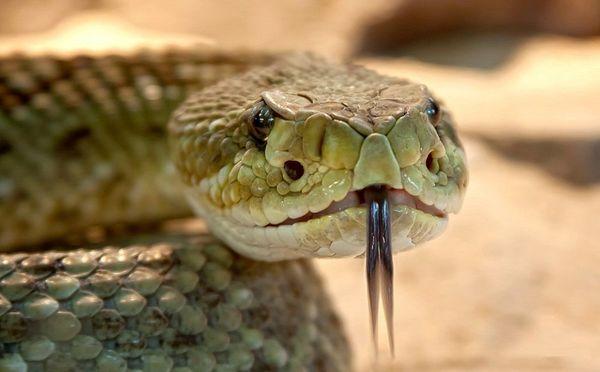 Профессиональное уничтожение змей
